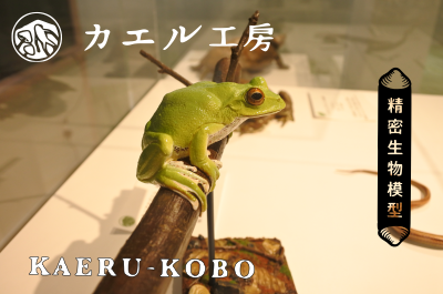 常設展示に「カエル工房」作品を追加。イメージ